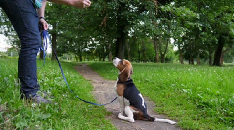 Cómo enséñarle a tu perro a sentarse