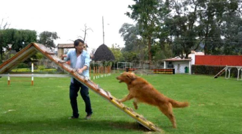 Comandos de obediencia que debes aprender antes de entrenar a tu perro a obedecer